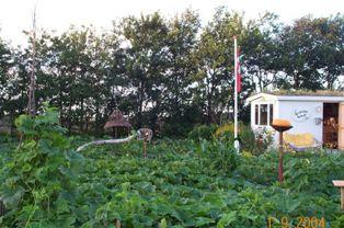Græskarhaven Pumpkin Græskar